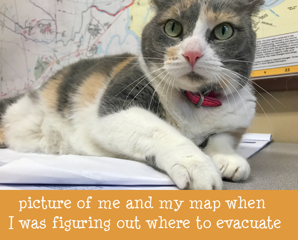 Petunia with map.JPG