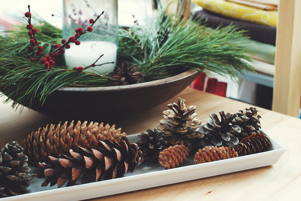 Pinecone_Collection_Web.jpg