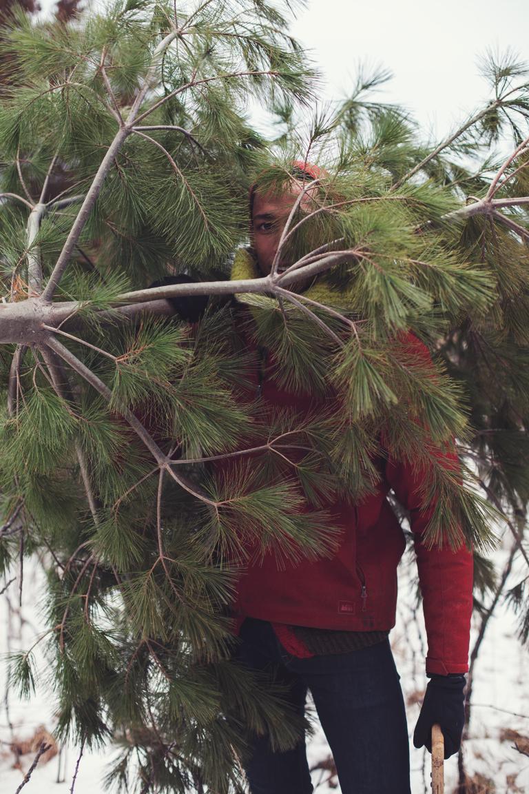 Calvin_Tree2.jpg