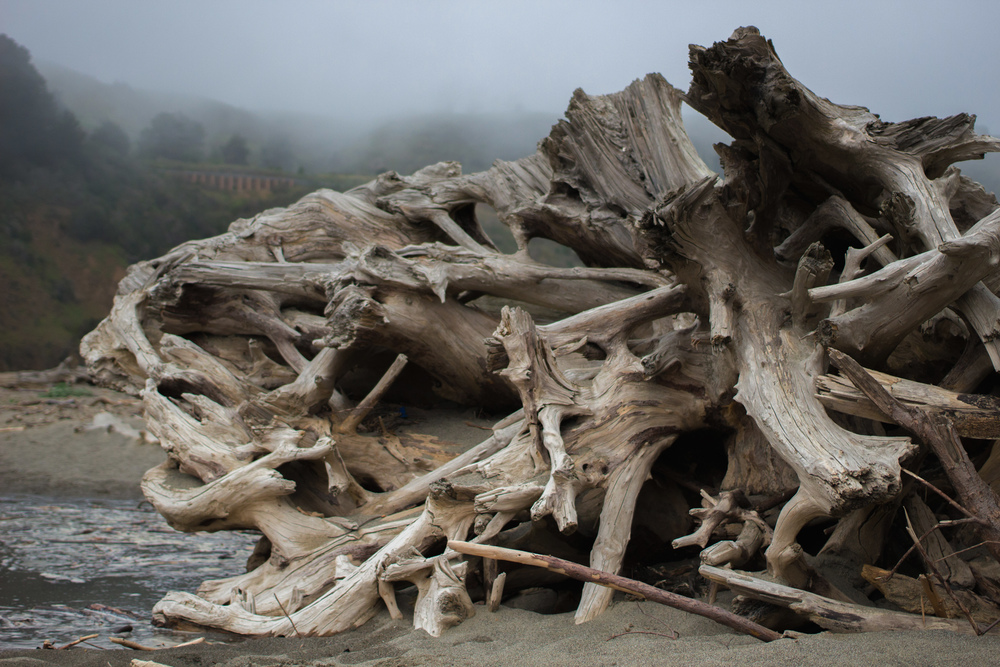 Driftwood and Fog