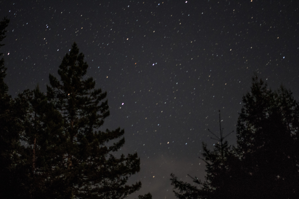 Starry night in the redwoods
