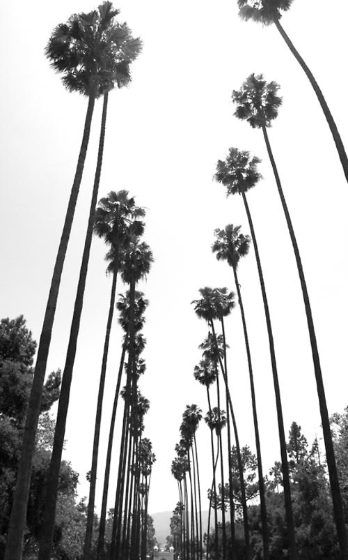 la-palm-tree-street1.jpg