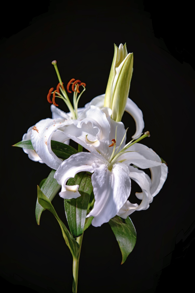 Lillys sample image_01.JPG