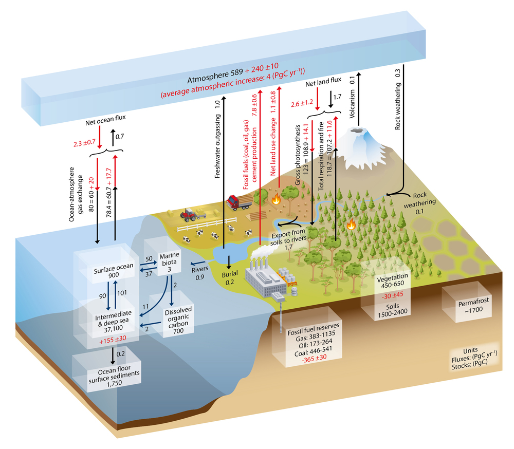 The Global Carbon Cycle, from the IPCC 2013 Working Group I (http://www.climatechange2013.org/)