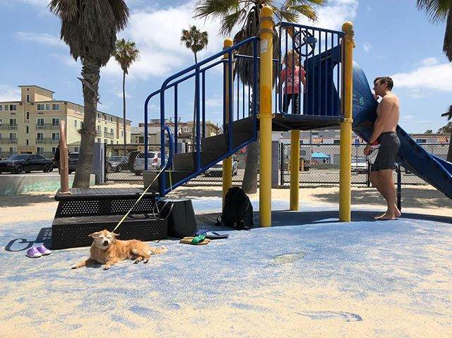 Taking slide duty very seriously this AM #dogsinplaygrounds