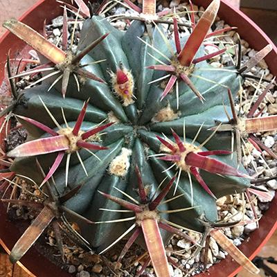 Cactus closeup.jpg