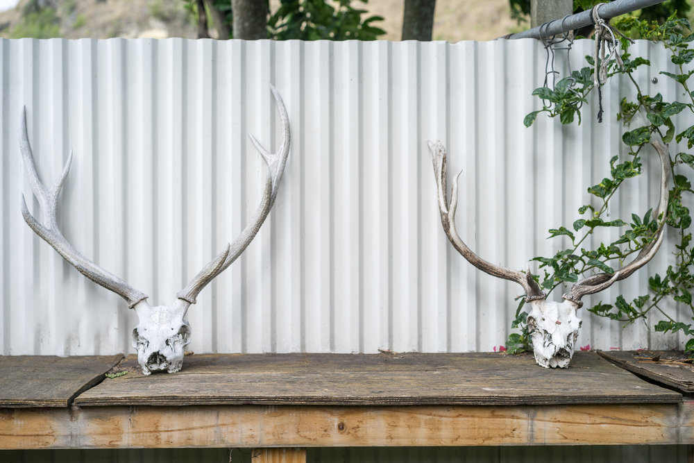 Deer antlers on old wooden table outside.