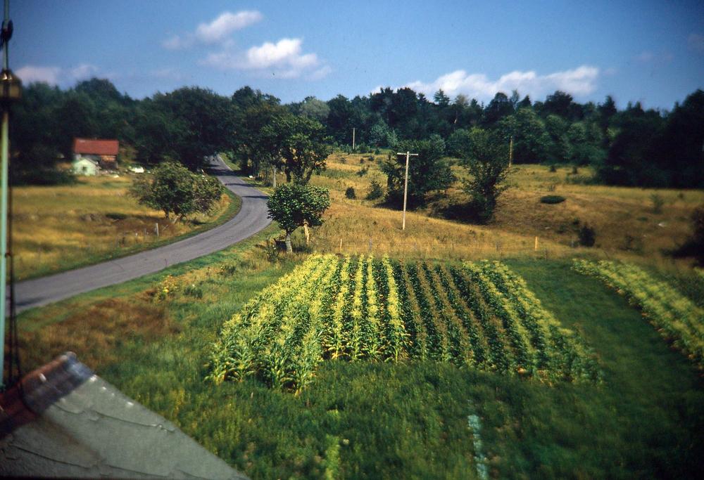 garden,road copy.JPG