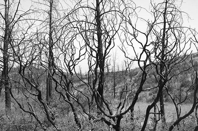 Charred trees in Lake County
