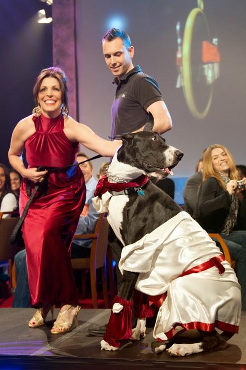 doggies-on-the-catwalk-gpb-fashionado
