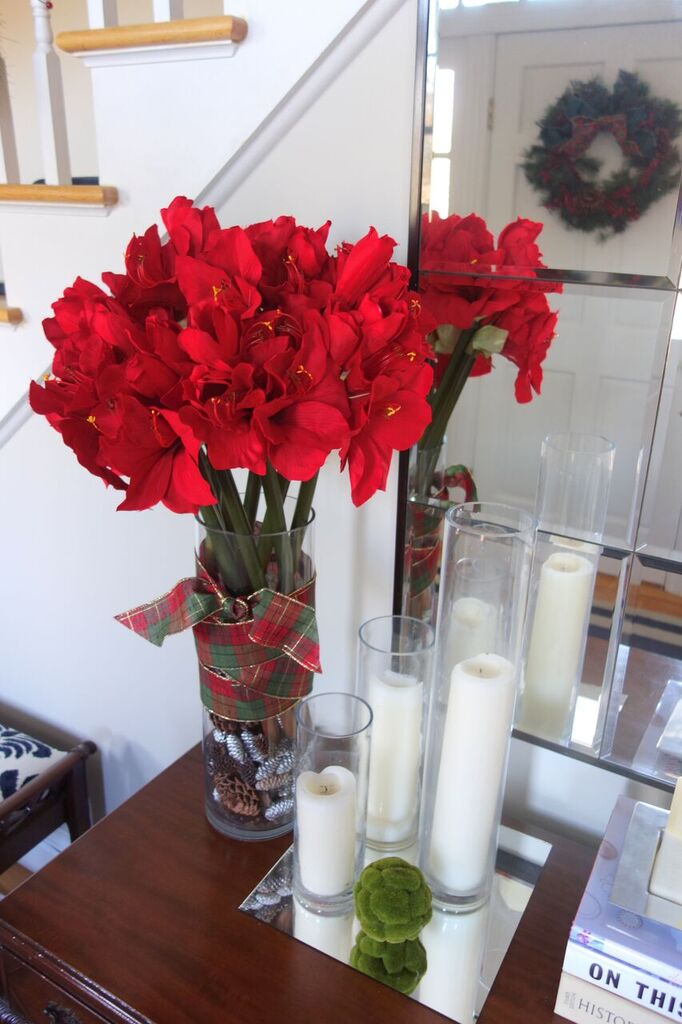 amaryllis holiday decor