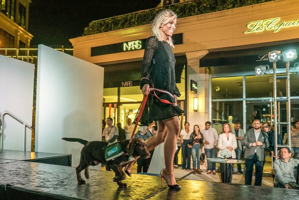 Doggies on the Catwalk 2017