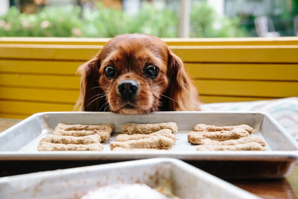 HAMPTON + HUDSON LAUNCHES MONTHLY DOGGIE MINGLE ON THE PATIO AND INTRODUCES HOMEMADE DOG TREATS