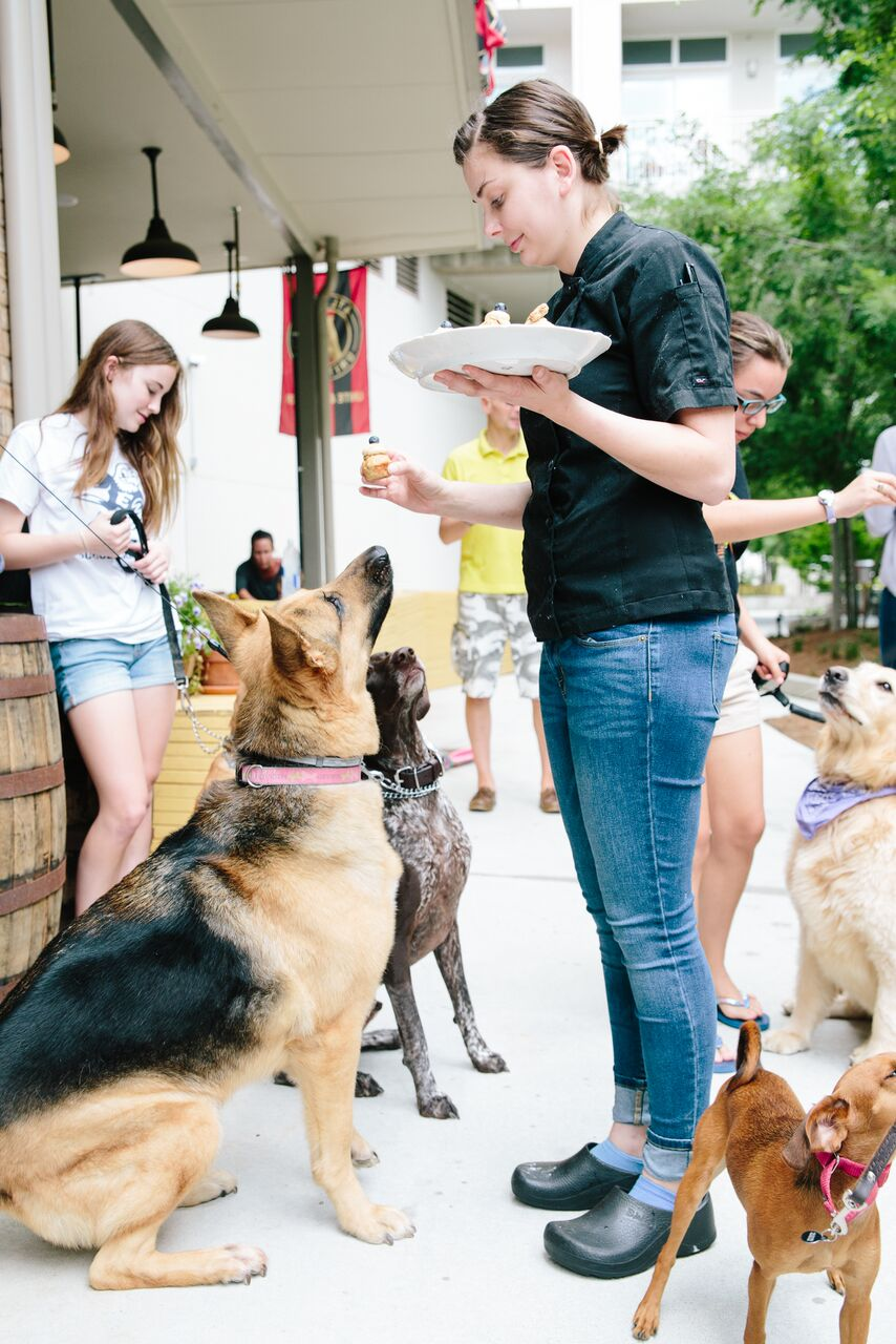 Hampton + Hudson Doggie Mingle