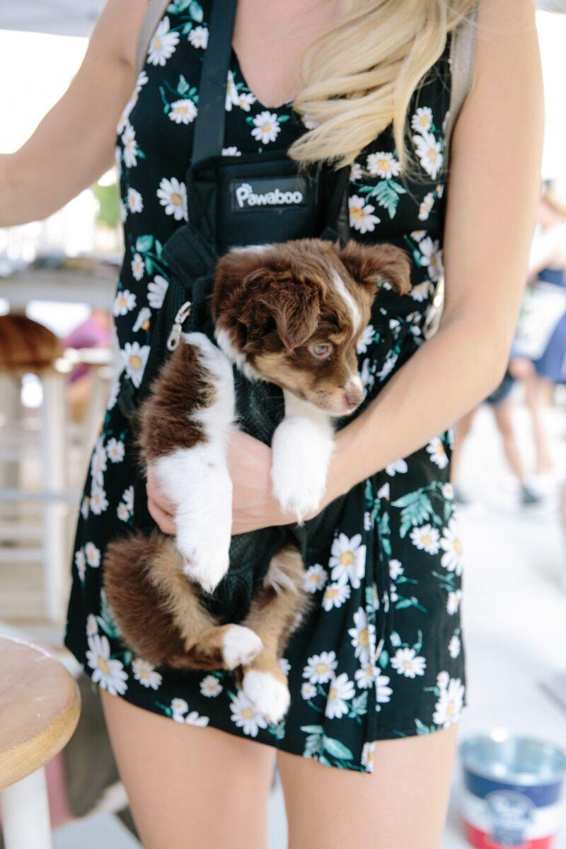 Doggie Mingle