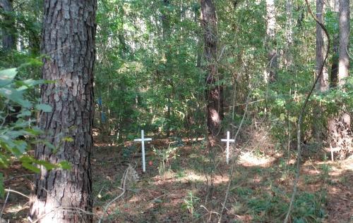 REVOLUTIONARY WAR: The white crosses designate graves from the Battle of Kettle Creek near modern-day Washington, Ga.