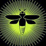 serenbebug.jpg