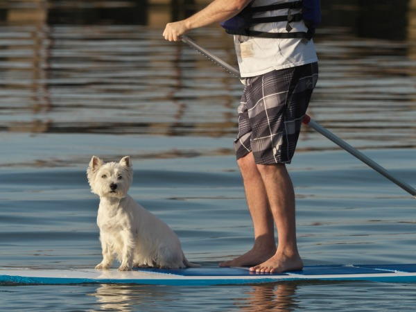 Even though dogs aren't allowed on Tybee Island's beaches, they can take to the water. Photo: Gavin Edmondstone