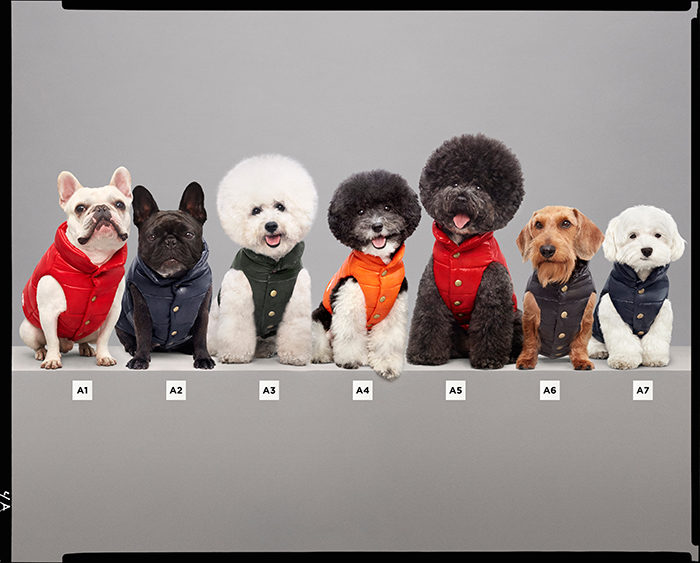 MONCLER-POLDO-DOG-COUTURE