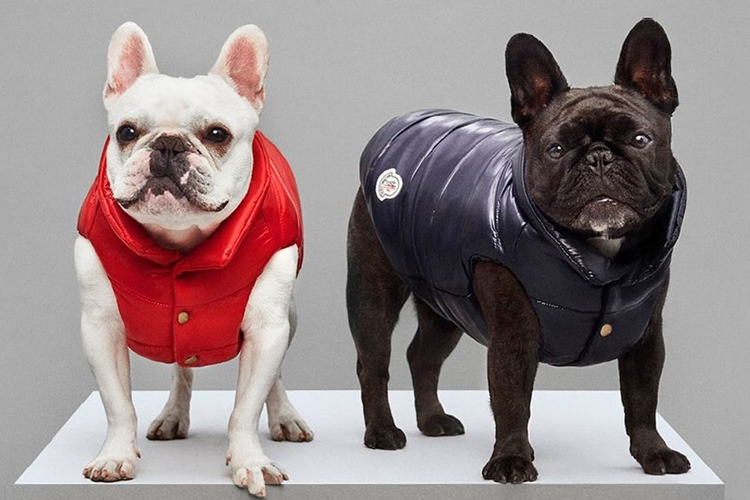 MONCLER POLDO DOG COUTURE FW18