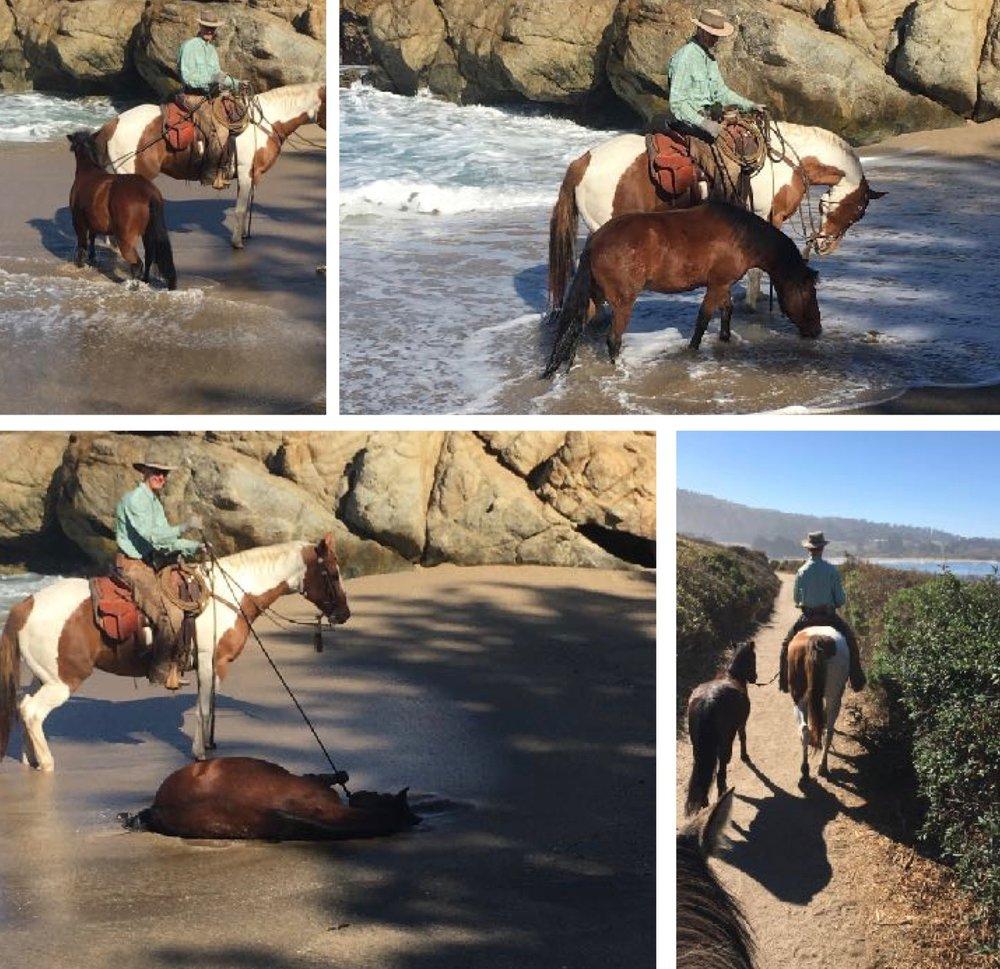 Bentley @ the Beach collage.jpg