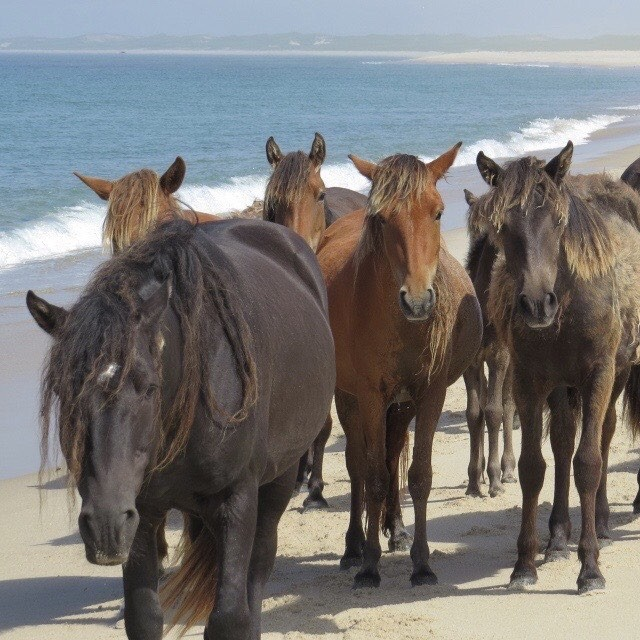 Sable Island Wild Horses of Nova Scotia Canada - My Magical Horse Guided Meditation and Drawing Exercise #kidsyoga #kidsmeditation #kidsmindfulness #horses #unicorns #mindfulness #guidedmeditation #yoga