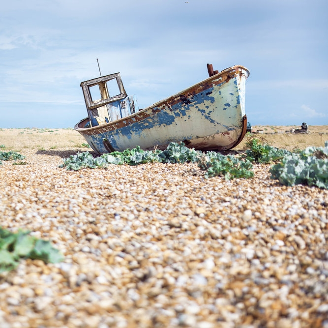 Enter the Dungeness Online Gallery here.