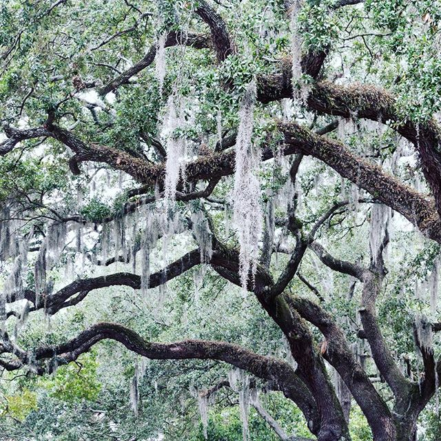 """From that day on, if I was goin' somewhere, I was runnin'."" Also: Spanish moss 💔👌🏻"