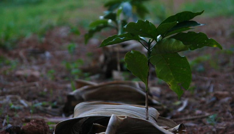 img-harvest3.jpg