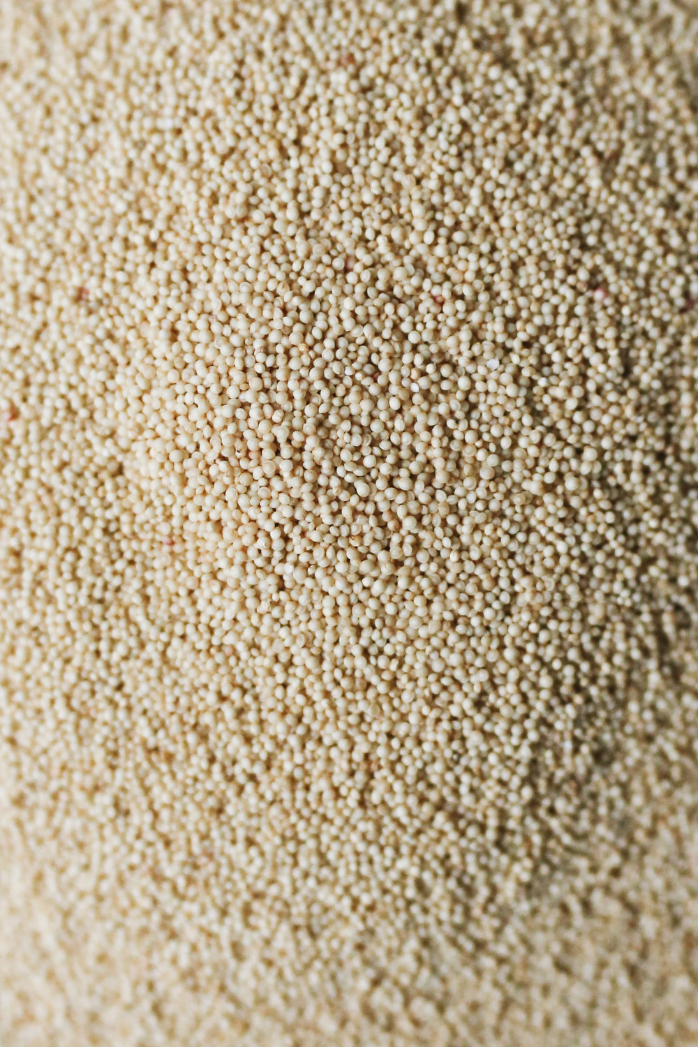 amaranth (1 of 18).jpg