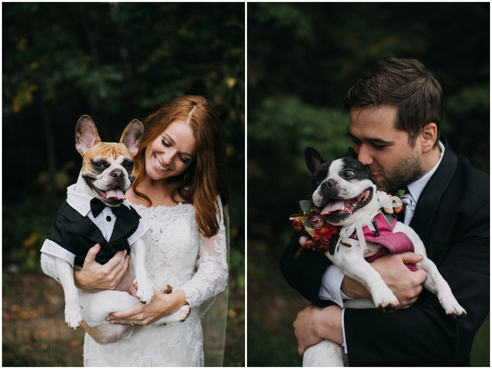 French bulldogs dressed up for wedding at the Quartdeck Resort