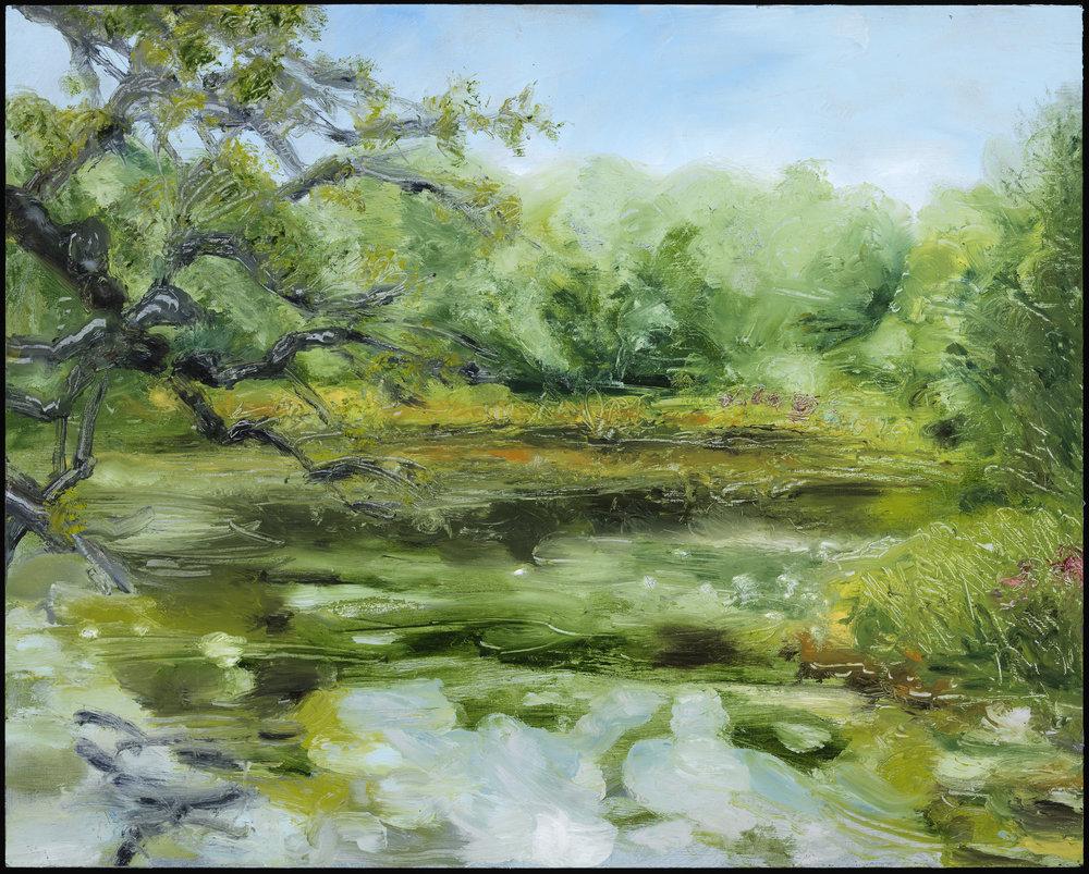JP's frog pond