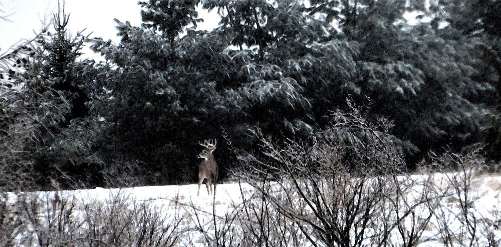 "Mary Rapp Reakes, Spirit Animal     Photography 11"" x 14""                                               Price $250"