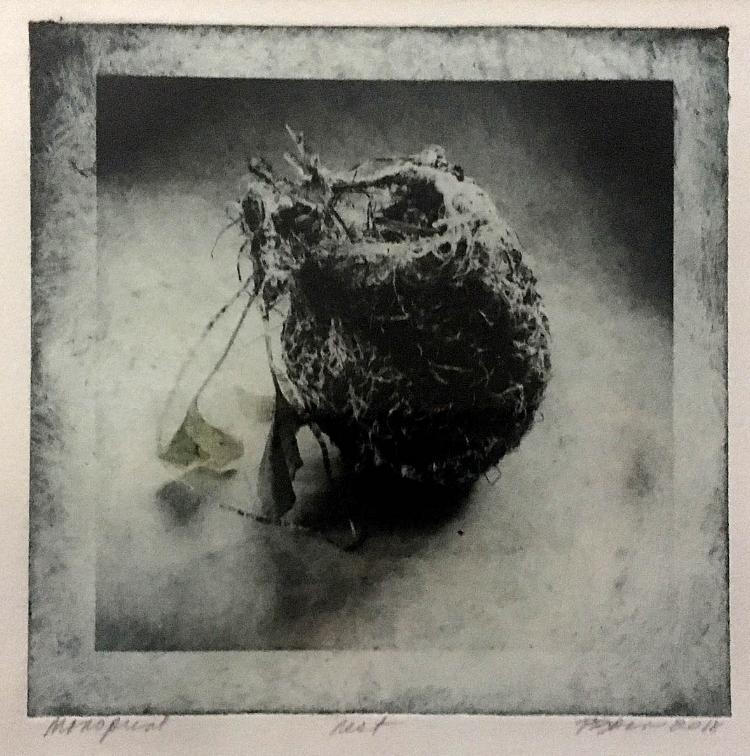 Pat Bacon,  Nest,  Phtogravur, polymer, 260.