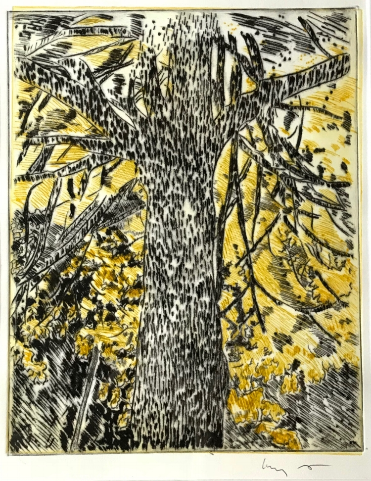 Kimberly Hart,  Night Tree,  Etching, 75.
