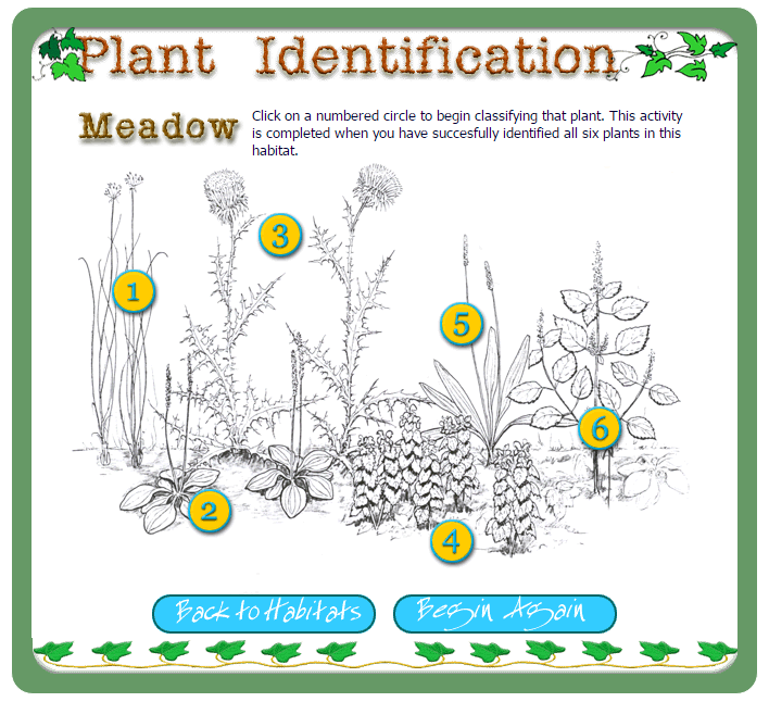 Plant Identification Game