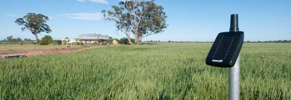 Solo Soil Moisture Probe