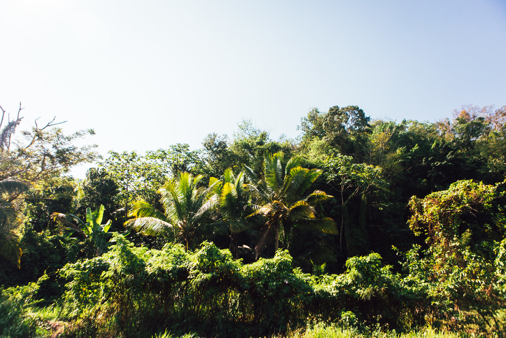 Jamaica-74.jpg