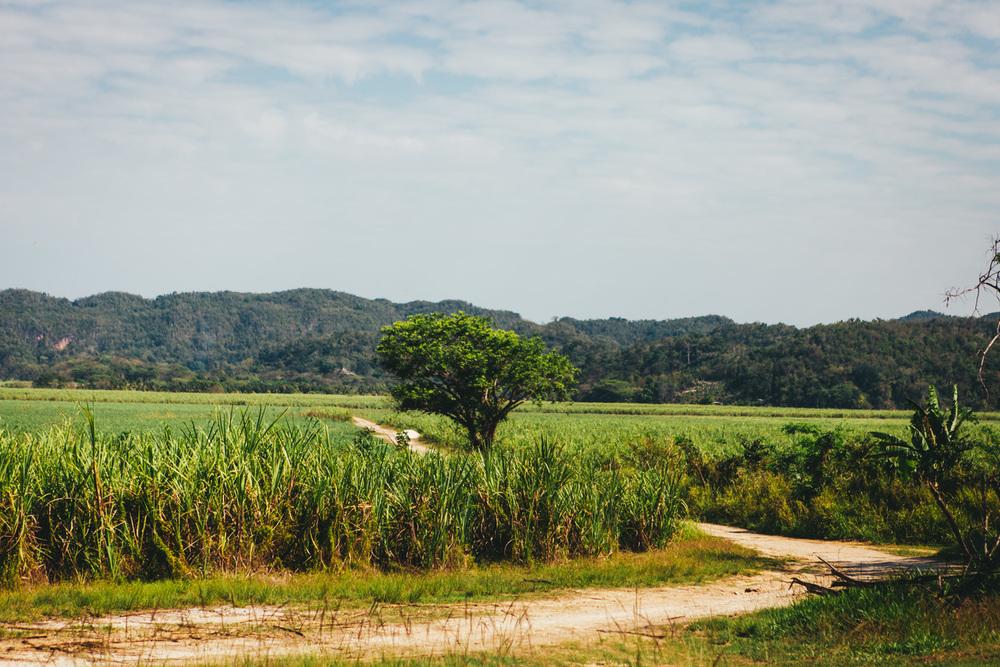 Jamaica-75.jpg