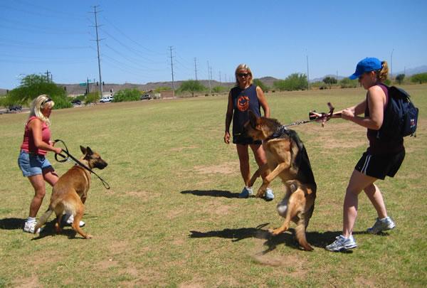 Training aggressive dog