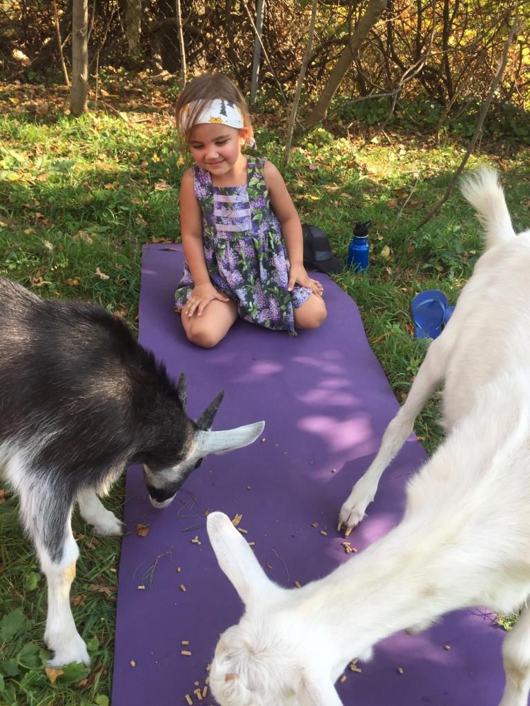 goat_yoga5.jpg