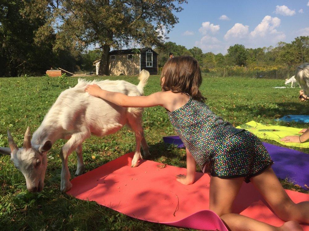 goat_yoga6.jpg
