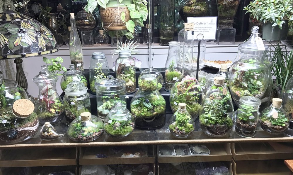 Terrariums to fit ever occasion and every budget. And, every planting is backed up with our No-fault Warranty and Free Maintenance.
