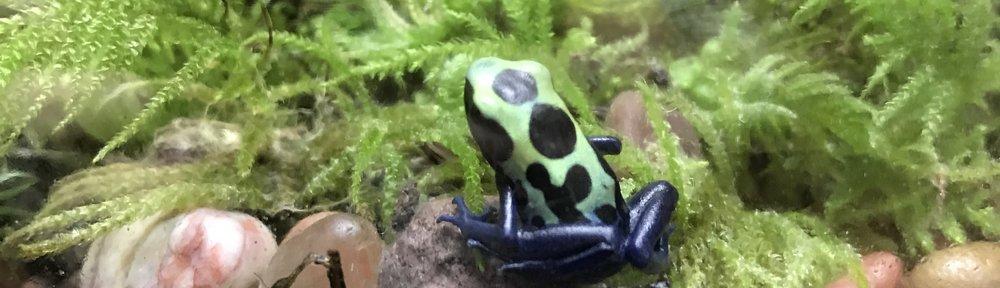 A Green Sip Poison Dart Frog