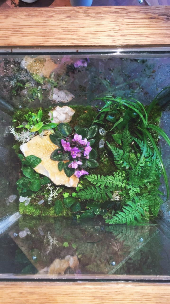 Custom repair with rock fern, african violet, ficus pumila, mondo grass.jpg