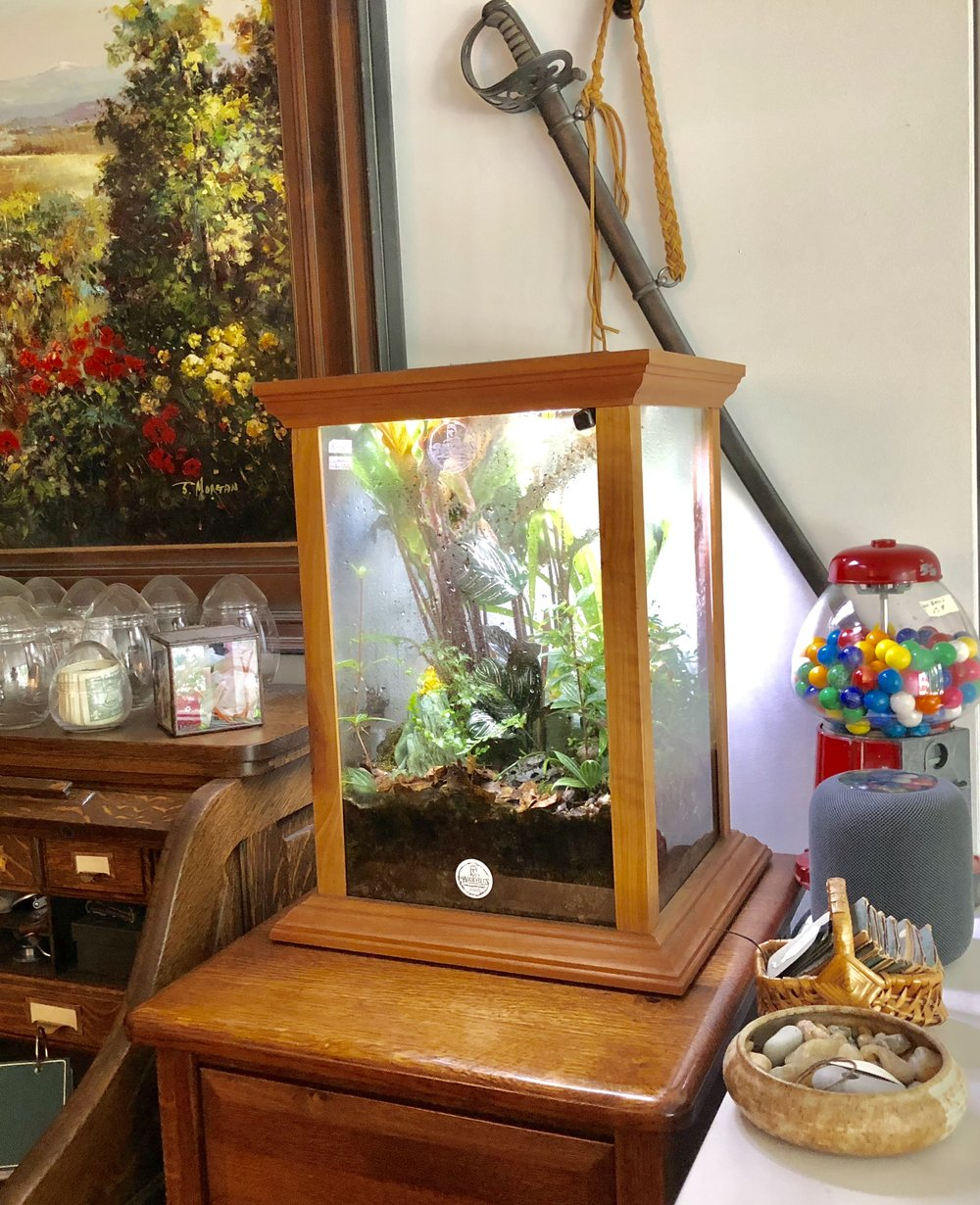 This is my own personal terrarium here in my Quarters, upstairs from the shop. I made it myself out of solid cherry. It has had one poison dart frog living happily inside for the last 14 years!