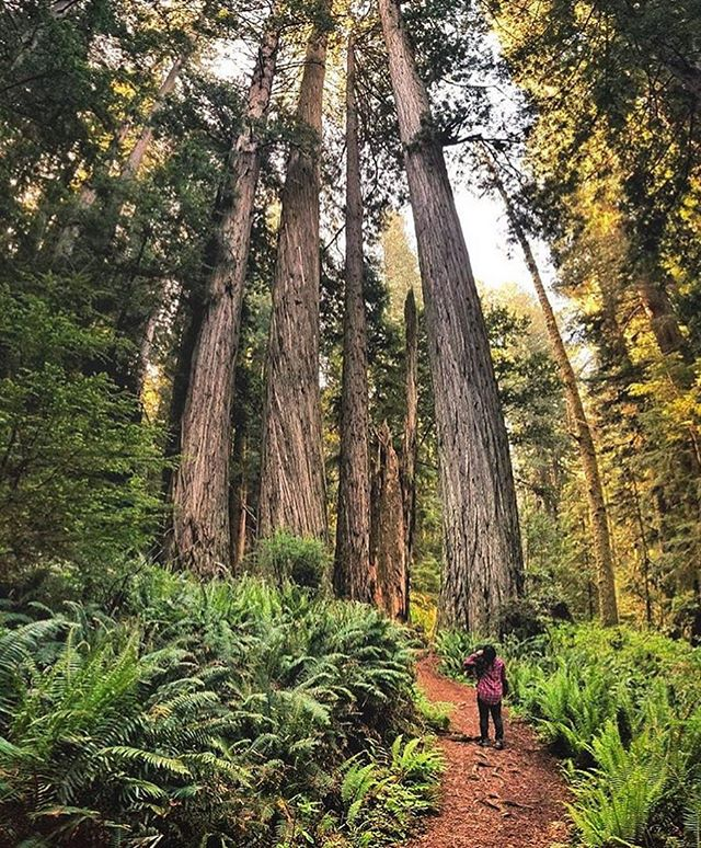 HOME TO THE TALLEST TREES ON EARTH. May the high hopes we have always drive us! ☀️❤️ Live Adventurously. Live like there is no box. That is #TheMotiWay! 📸 Sick capture by @tiffany.hikes ! • • • • • • • #neverstopexploring #adventuretime #wanderlust #campvibes #happycamper #hikecalifornia #adventurechaser #nationalpark #sequoianationalpark #redwoodforest #adventuring #roadtrip #dreamers #sunsetchaser #adventuring #exploring #adventurer #mountainsarecalling #loveoutdoors #forest_captures