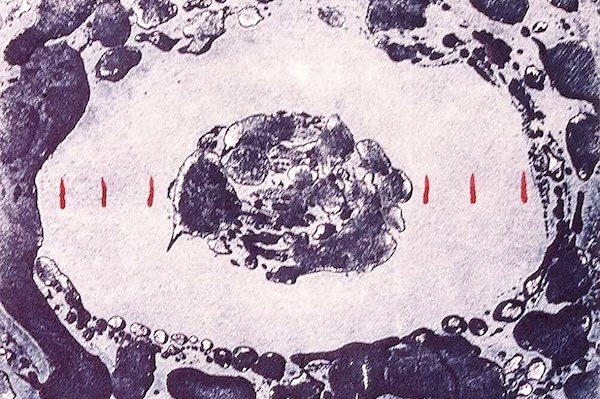 Sea,linocut,1996