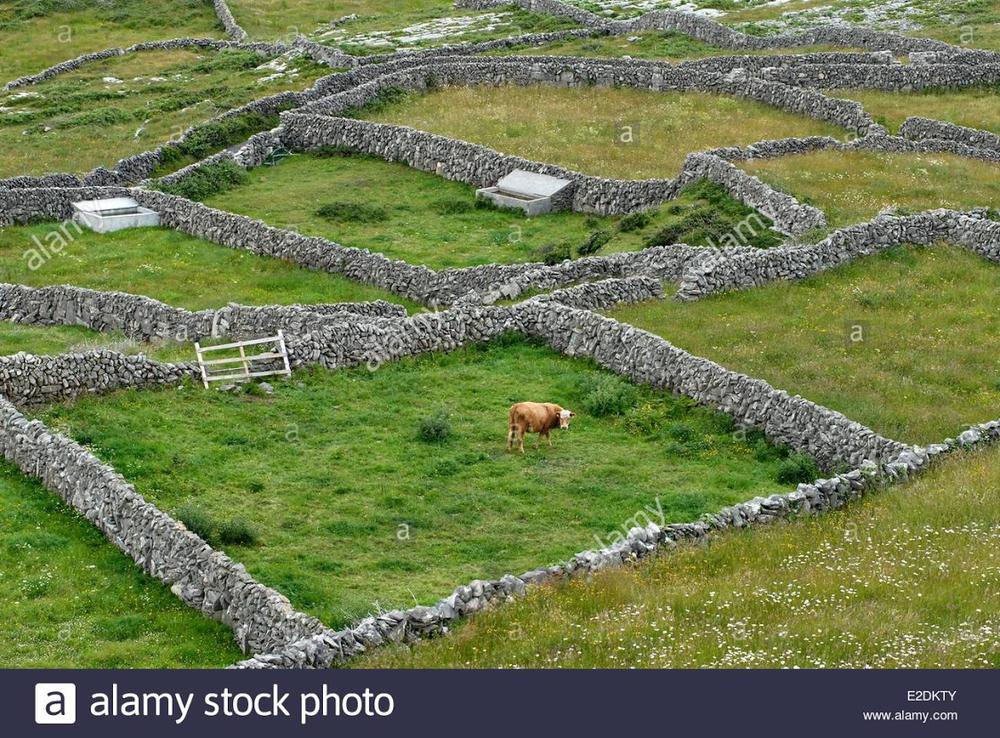 art-com-1710-fm-stone-walls-ireland-f-05.png