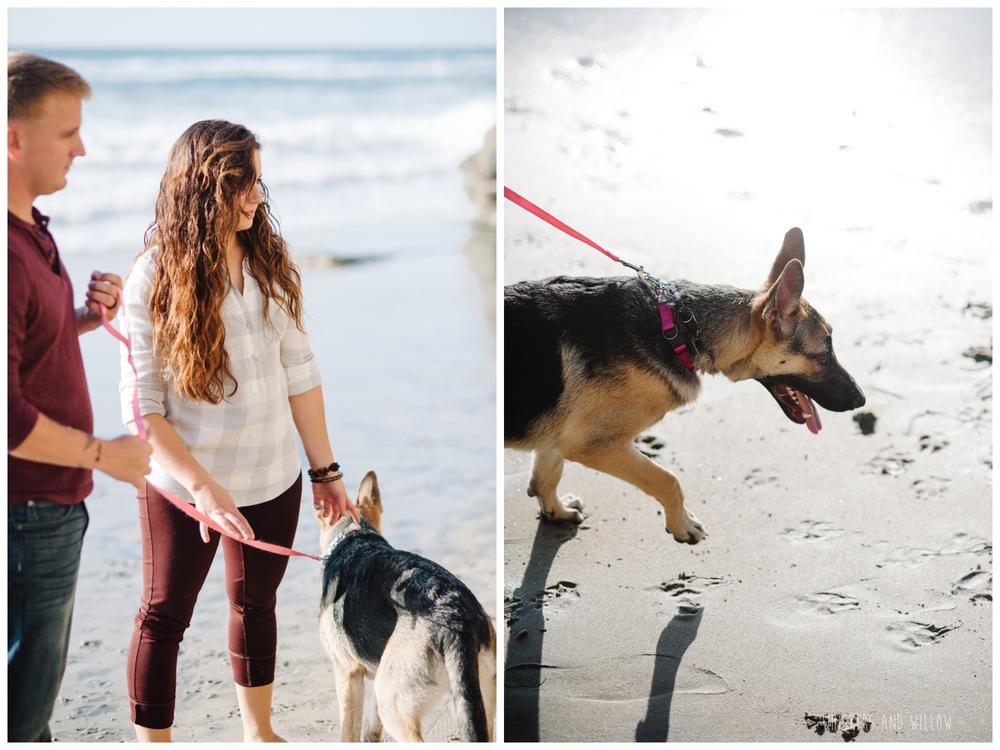 Del Mar Dog Beach Photo 037